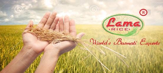 harvested-4-worlds